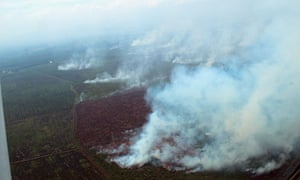 Numerous illegally lit fires continue to rage the peat swamp forest of Tripa, Sumatra