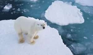 A polar bear near Longyearbyen, the capital of Svalbard, Norway, where an oil rush is threatening
