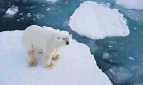 A polar bear near Longyearbyen, the capital of Svalbard, Norway, where an oil rush is threatening