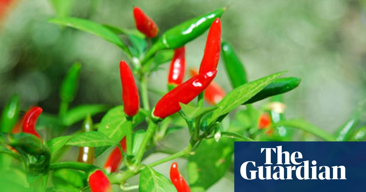 The British farmers growing exotic crops | Food | The Guardian