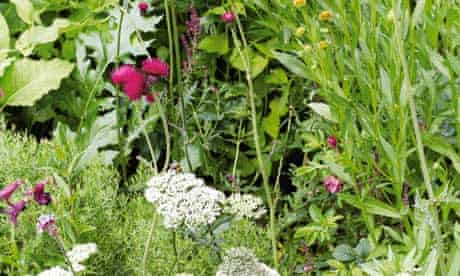 Gardens: Old English Garden