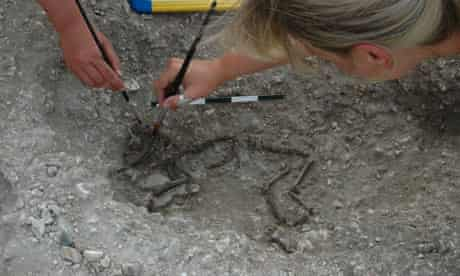 The tiny skeleton of a dog at the Silchester dig