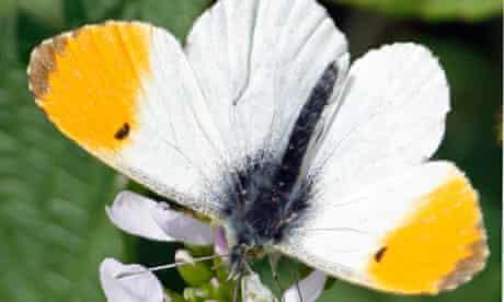 Gardens: butterflies
