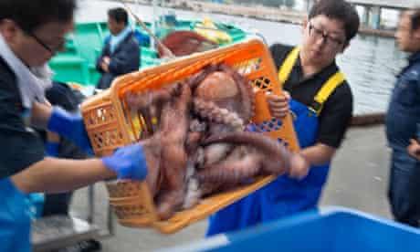 Japanese fisherman unload octopus catch