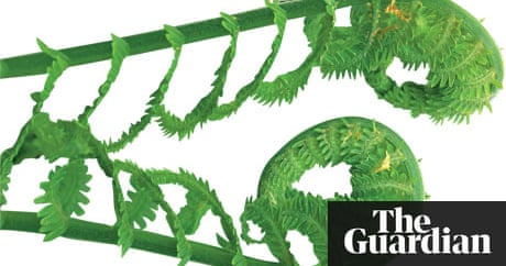 Gardens Ferns Life And Style The Guardian