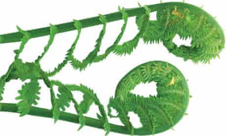 Gardens: ferns