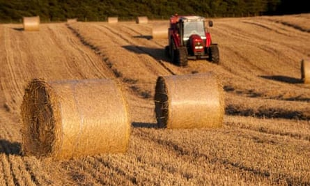 Farmers make hay bales using tractor