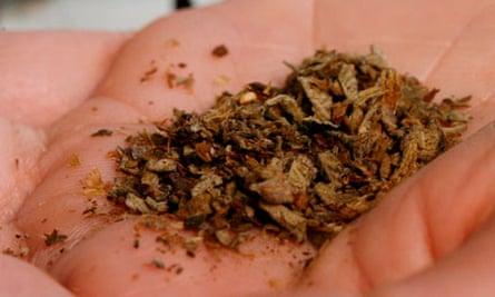 'Spice' … a popular synthetic cannaboid.