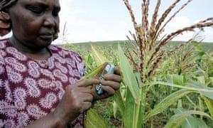 Kenyan farmer sending a text message