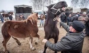 Horse fair in Poland
