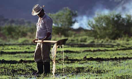 Colombian Rice Farmer