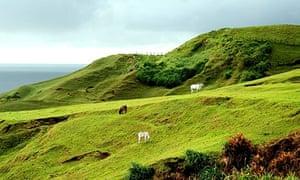 animals grazing on hills