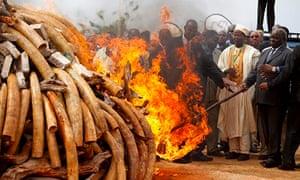 Kenya burns 4.6 tonnes of contraband ivory