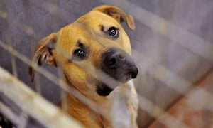 A dog at Cardiff Dogs Home, who faced overcrowding after Christmas.