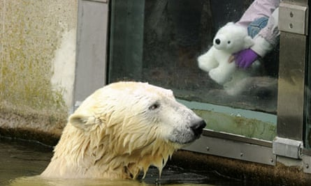 Polar bear Knut interacts with a six-year-old zoo visitor