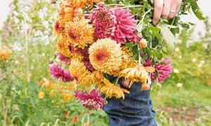 Gardens: chrysanthemums