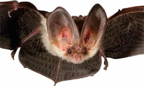 Gardens: bats