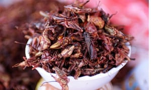 Mexican grasshoppers fried in chilis … could you?