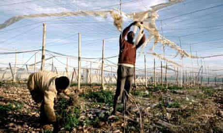 Two men working in fields