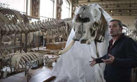 Elephant skeleton Jacques Cuisin Paris Natural History Museum
