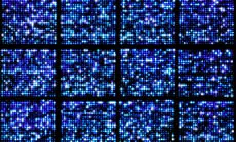 DNA microarray of human genome structure