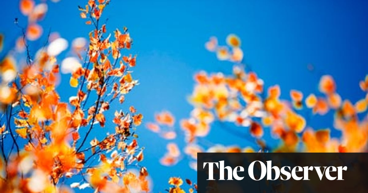 Nine gardening myths debunked | Life and style | The Guardian