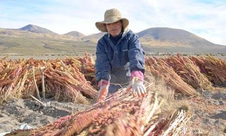 Quinoa farmer in Bolivia