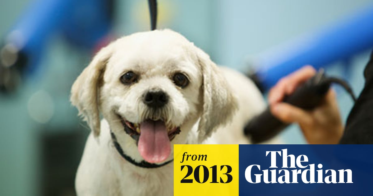 Pets at Home pays around £40m for Vets4Pets | Business | The