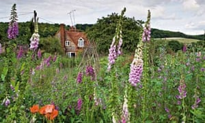 Gardens: wildflowers