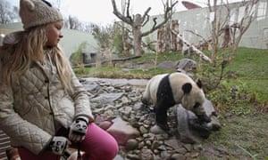 Edinburgh Zoo's Pandas Meet The Public For The First Time