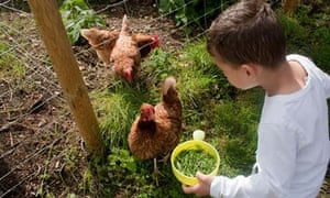 Essential equipment for the chicken keeper | Life and style
