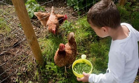 Should I Feed Kitchen Scraps To My Chickens Life And Style The