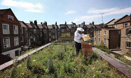 Beekeeper with hive on a rooftop surrounded by houses