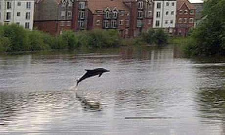 The River Dee dolphin … in good company.