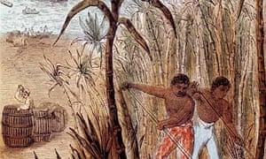 Slaves cultivating sugar cane in the West Indies