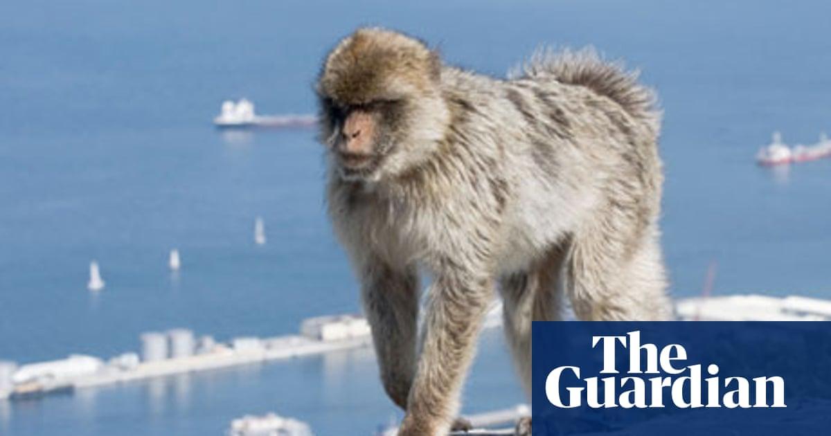 online dating Gibraltar 100 ilmainen online dating musta singleä