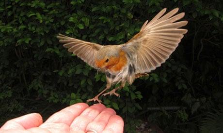 How long for robins to mature, made facial exfoliant