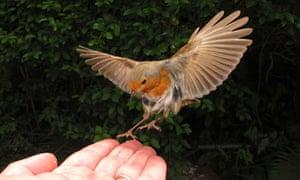 Hugh Warwick with trained robin.