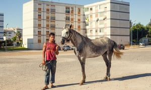 Pigs Portugal boy with horse
