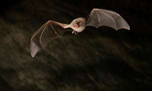 Mers is closely related to viruses found in bats