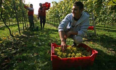 Romanian fruit pickers