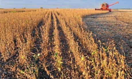 A combine harvests soybeans near Salto, Argentina