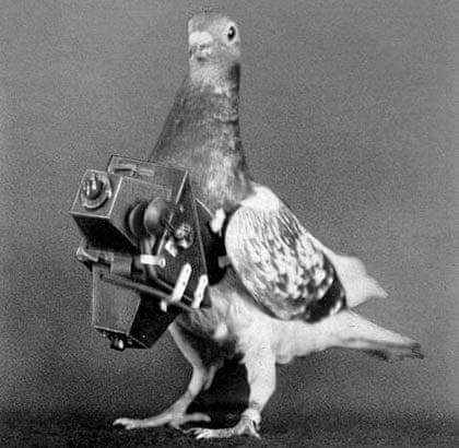 Pigeon cam