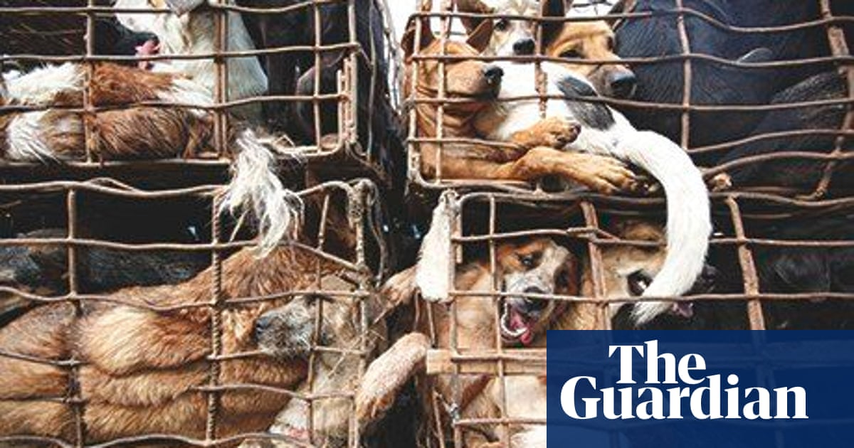How eating dog became big business in Vietnam | World news