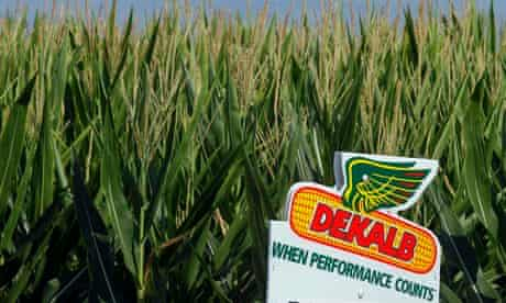 ''Farmers find it difficult to return to non-GM cropping as the GM seeds persist in their soil.'