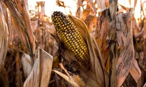 EU moves to curb food price bets