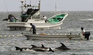 US ambassador to Japan 'deeply concerned' about dolphin drive-hunting