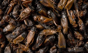 Close-up of cooked crickets© Gustav AlmestålCooked crickets