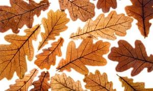 Alys Fowler: leaf mould