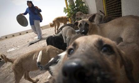 A volunteer feeds dogs at the Vafa animal shelter in Hashtgerd, Iran